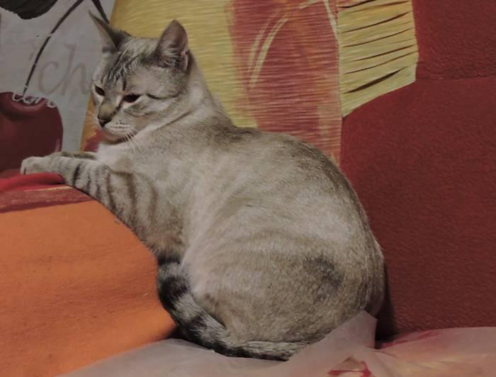 котята, пристройство, волонтер