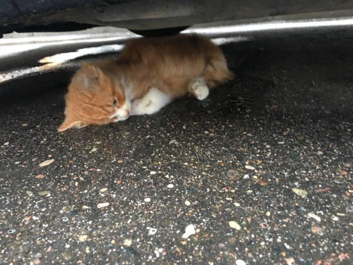 котенок, Билево, убийство