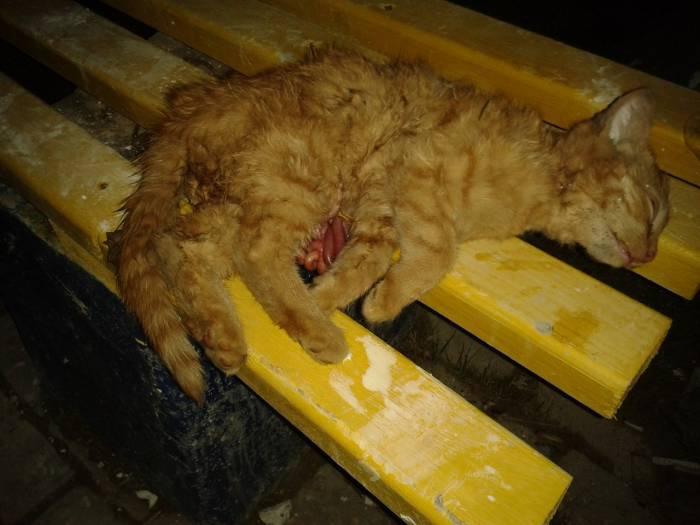 котенок, живодер, убийство