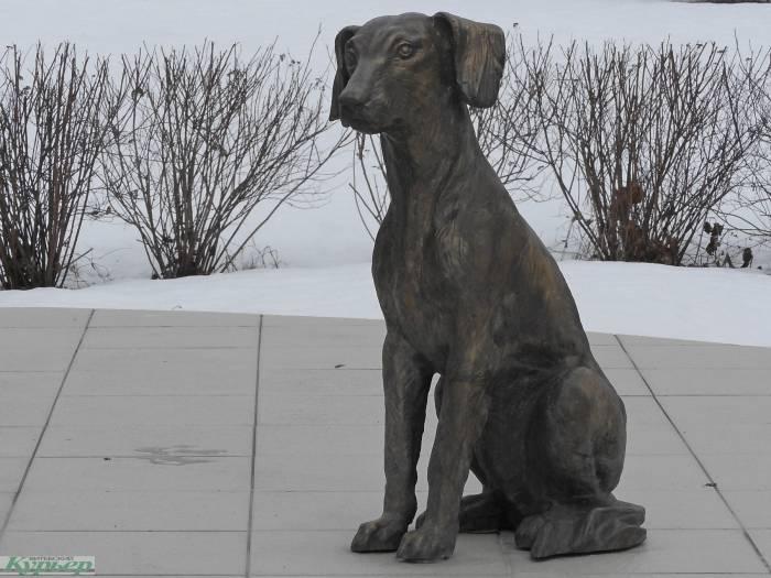 4 собаки Витебска, которые исполняют желания