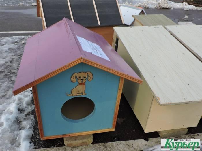 витебск, приют, бездомные, животные