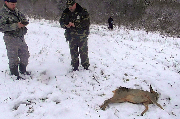 косуля петля браконьер