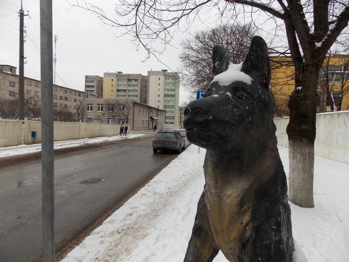 Витебск, Суд, собака, пёс