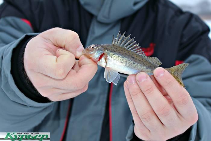 Проверено лично: Клюёт ли зимой рыба на озере Отолово в Ушачском районе