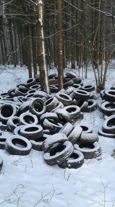 Более ста покрышек неизвестные выбросили в лесу под Оршей
