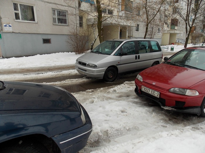 Витебск, улица, воробьи, машина