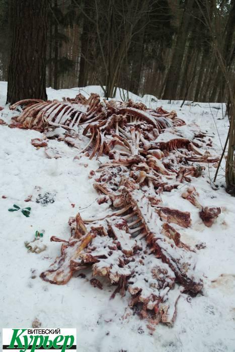 Это настоящий шок. Кого съели в Лучесском лесу?