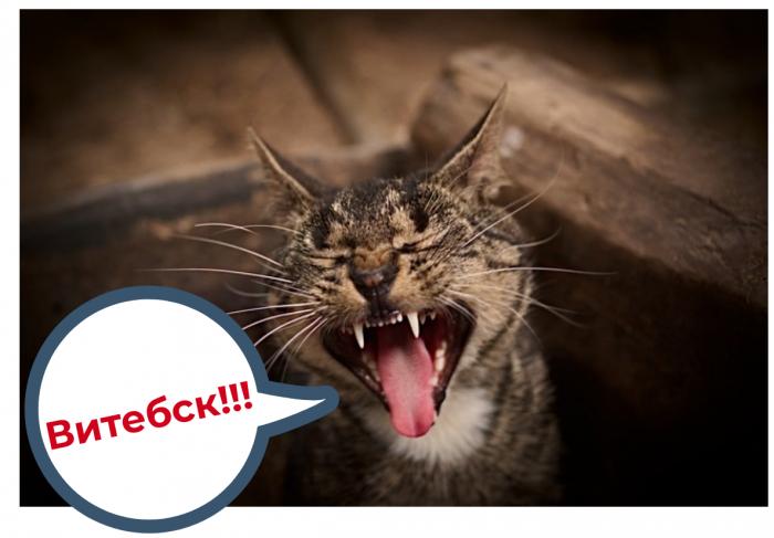 Говорите по-витебски? Проверим, как хорошо вы понимаете местных!