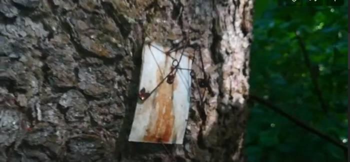 Жуть. Вуду в витебском Билево обнаружила майским днем жительница микрорайона
