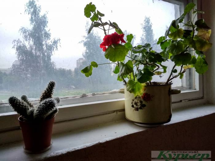 7 странных вещей, которые можно найти в подъездах Витебска