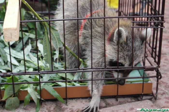 10 забавных животных, которых можно увидеть на «Славянском базаре в Витебске»