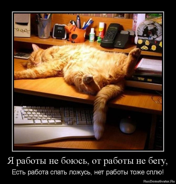 Прикольные картинки когда спишь на работе, днем