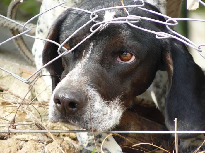 14 августа в Верховье Витебского района случилась трагедия. Стая собак напала на маленького ребенка и загрызла б его, если бы не тетя рядом