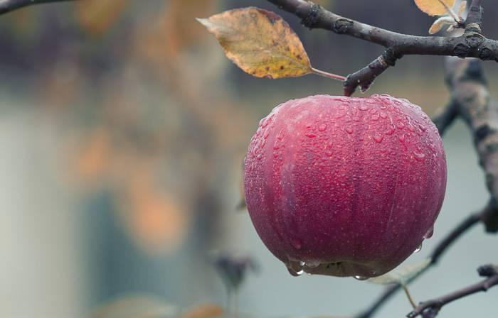 6 причин, почему в субботу нужно поехать на «Яблочный фест» в деревню Алашки Шарковщинского района