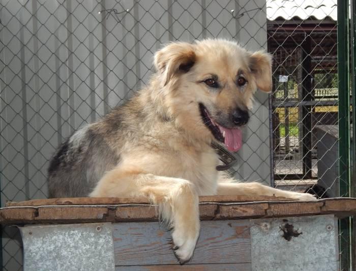 Витебскому приюту для бездомных животных сегодня 7 лет!