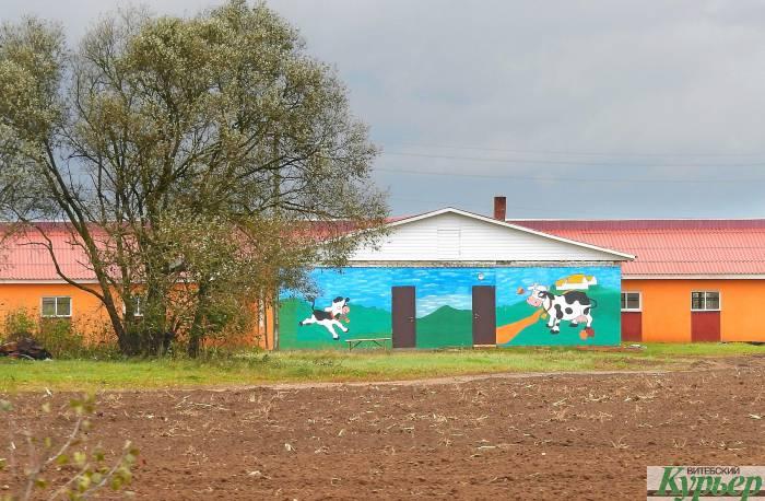 Креатив к «Дожинкам» в Верхнедвинске. И даже стрит-арт на коровнике