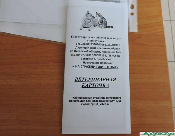 Витебский приют для бездомных животных vs минская«усыпалка» на улице Гурского