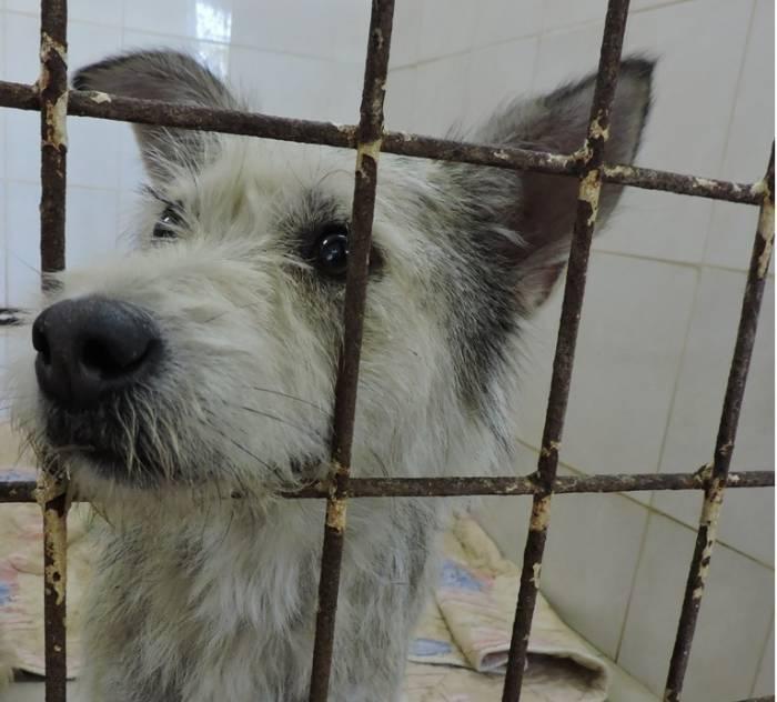 5 претензий в адрес Витебского приюта для бездомных животных и 5 ответов на них. Простых и понятных каждому