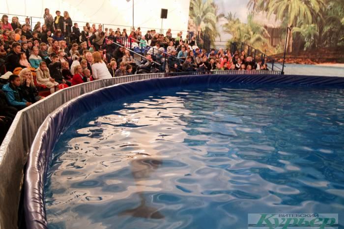 Дельфинарий в Витебске: «Конечно, животных жалко, но так уж у нас устроено…» Жестокость или приятное развлечение для ребенка?
