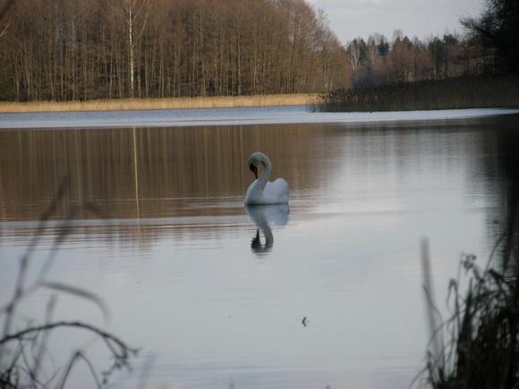 Как экологи «воюют» за забор на границе Беларуси. Чем ограждение может быть опасно для природы?