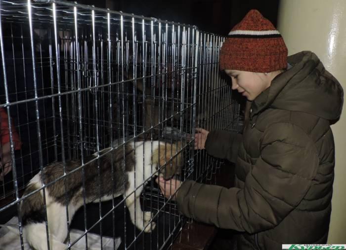 В КДЦ «Первомайский» прошла «Добрая акция». В Витебске оказалось много неравнодушных к проблемам бездомных животных
