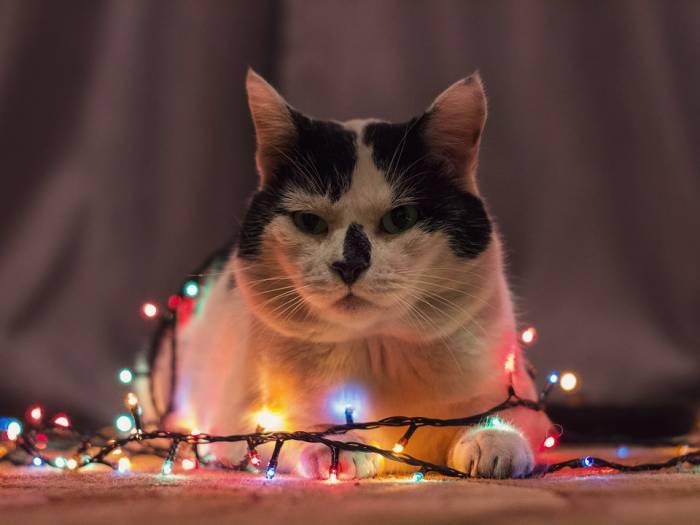 гирлянда, кот