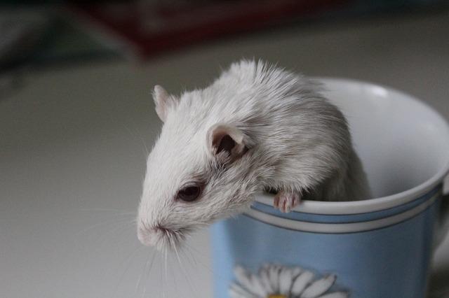 В Витебске Лепельский МКК судится с районкой из-за статьи о мыши, которая оказалась в пакете молока