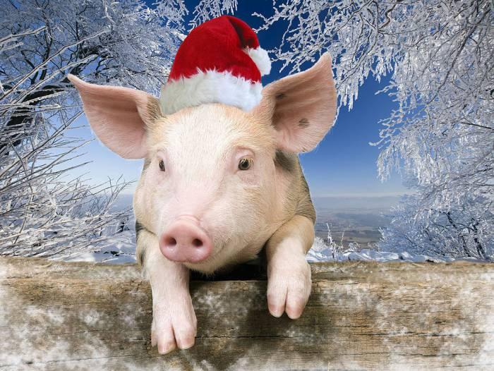 7 малоизвестных фактов о Свинье — символе 2019 года