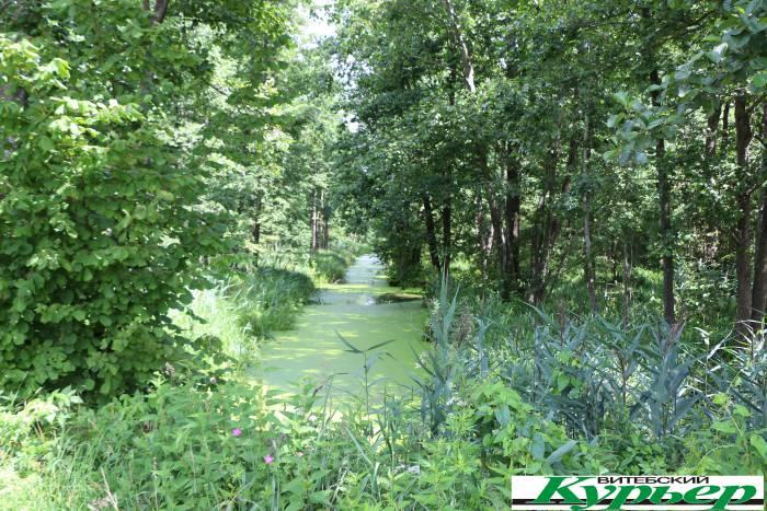 В Оршанском районе в поселке Ореховск есть бездонное болото и портал в другое измерение