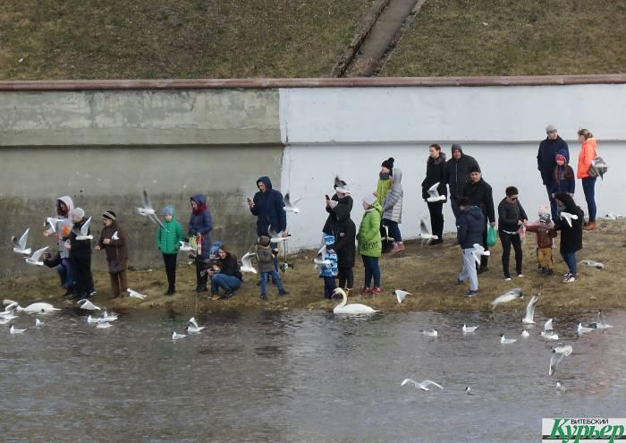 В Витебск вернулись чайки. Возле Кировского моста в воскресенье было очень громко и очень людно (видео)