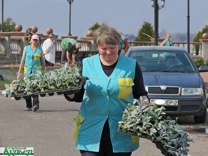 Какие цветы и где высадят в Витебске в этом году