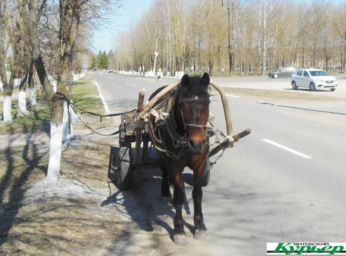 В белорусских деревнях лошадь становится редкостью. Почему Владимир из агрогородка Октябрьская ни на что не поменяет свой транспорт?