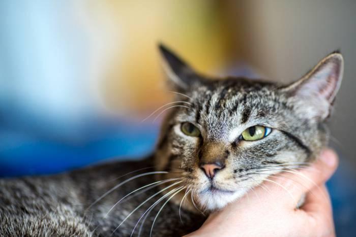 В Витебске предпочитают беспородных котов! Посмотрите, какими фото своих любимцев поделились наши читатели