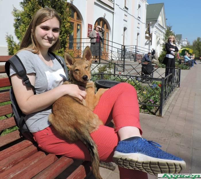 Как в Витебске прошла акция в пользу приюта для бездомных животных