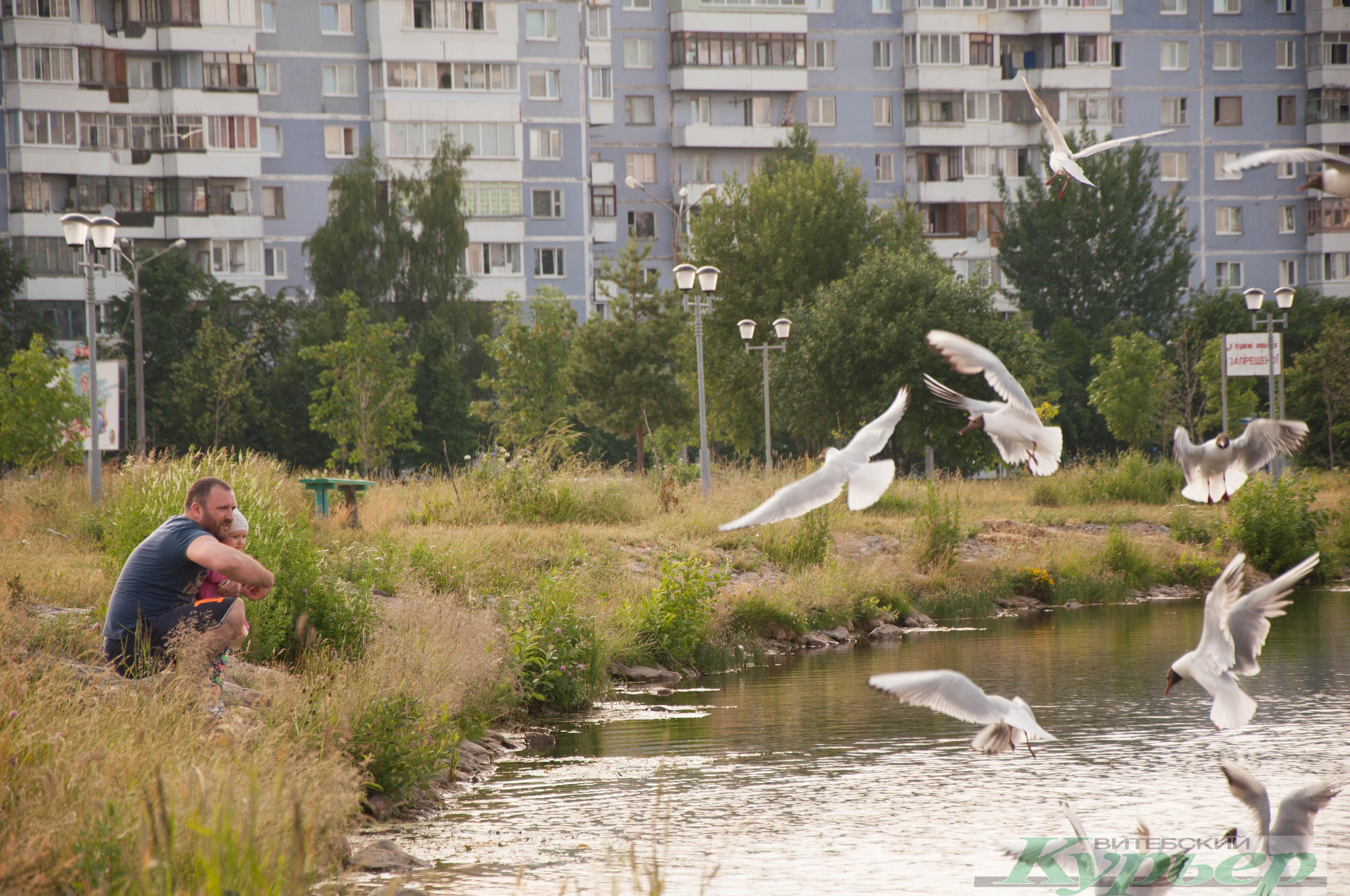 Как изменился водоем за Ледовым дворцом и что уже сделали в новой зоне отдыха