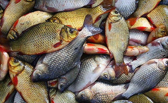 В Ушачском районе будут судить мужчину, который в мае в период запрета на лов рыбы добыл 41 окуня