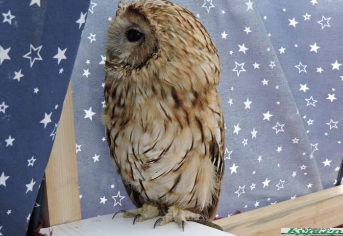 Каких животных и птиц можно увидеть на «Славянском базаре» в Витебске