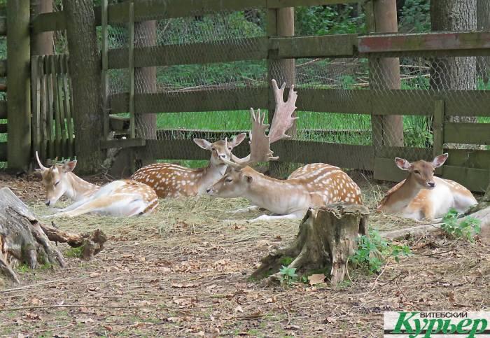 Зоопарк в Билево, который так и не стал Витебским национальным заповедником