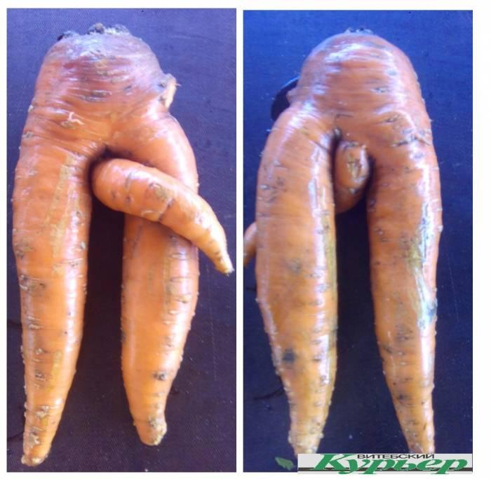 Необычную морковку вырастили в Витебском районе. С любовью, ваша морковочка!