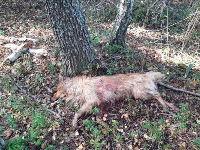 Ехал на квадроцикле, вынул оружие и застрелил беззащитную собаку. В Сенненском районе средь белого дня произошло ЧП