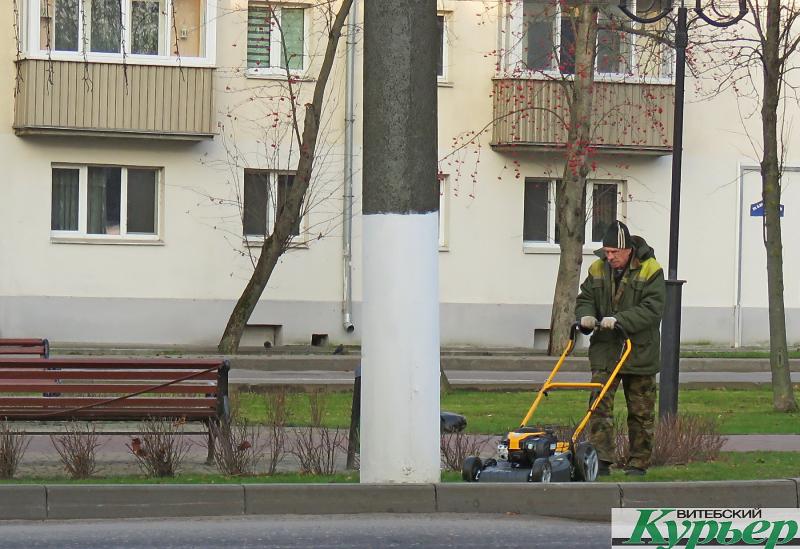 В Витебске продолжают косить траву и в середине ноября