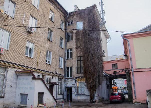 Где и как жила женщина, убитая жителем Витебска в Минске