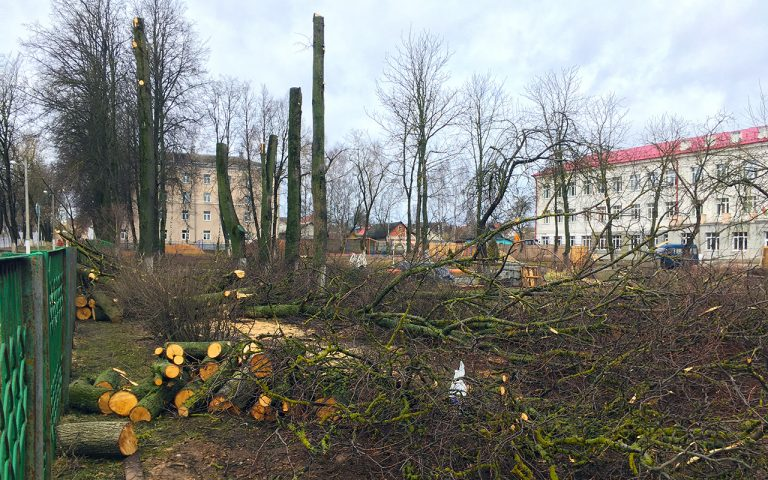 Липы у школы в Витебске порубили. Они не вписались в проект