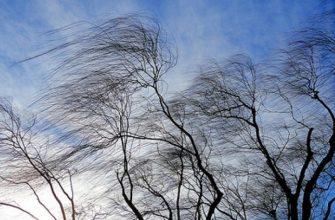 ветер погода