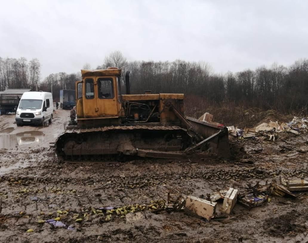 20 тонн груш из Беларуси уничтожили на свалке в российском Себеже