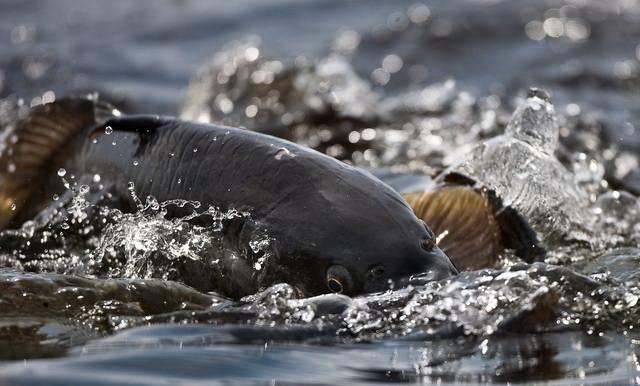 Опубликован список водоемов Беларуси, где проведут зарыбление