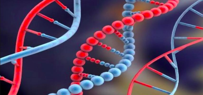 ДНК, РНК, кровь