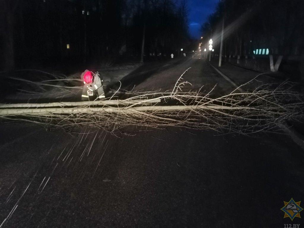 В Витебской области сильный ветер повредил автомобили и повалил деревья