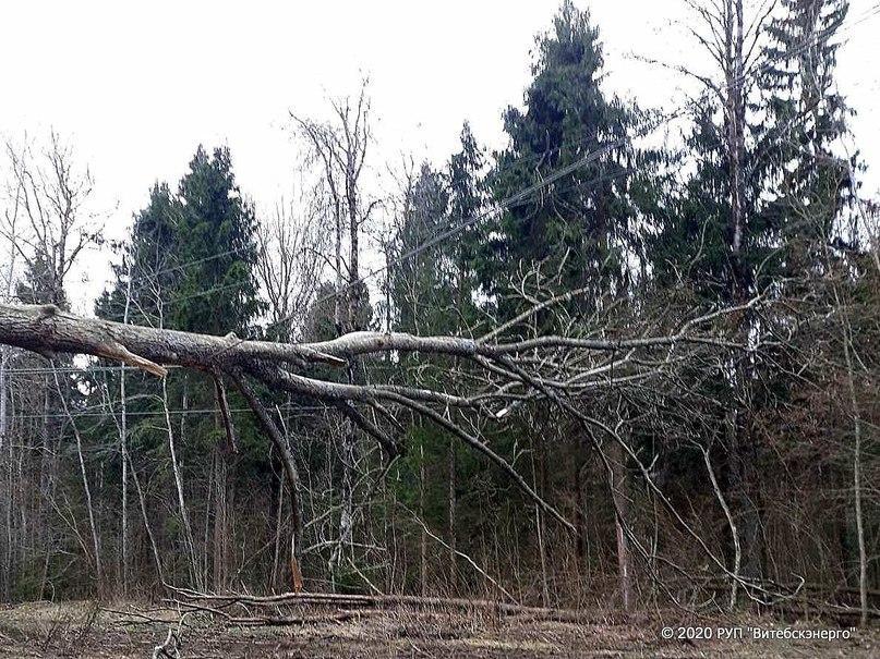 Энергетики Витебской области восстановили электроснабжение населенных пунктов, пострадавших в результате разгула стихии