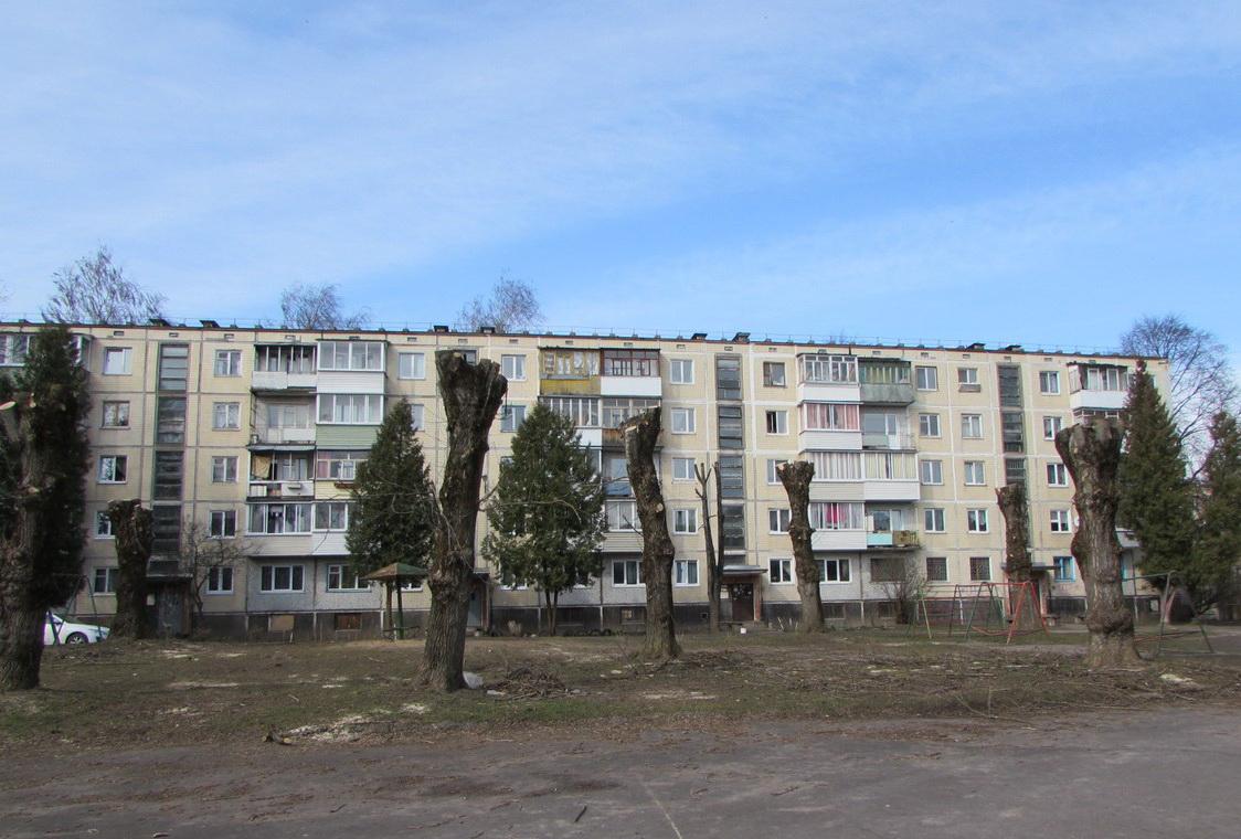 К чему привела «бездумная» стрижка деревьев в Витебске?